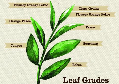 leaf-grades-483x340